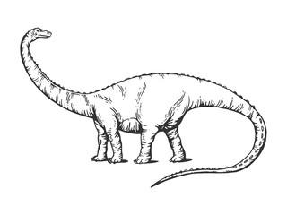 Diplodocus dinosaur engraving vector illustration