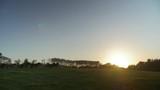 Wide Shot of Icelandic Horses running on the range land into the sunset in Denmark. - 214916746