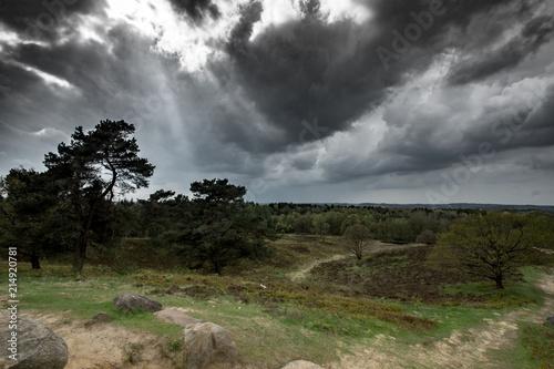 Foto Murales Landschaft im Naturpark Aukrug