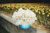 Bouquet of Tulips in Gift Box - 214925326