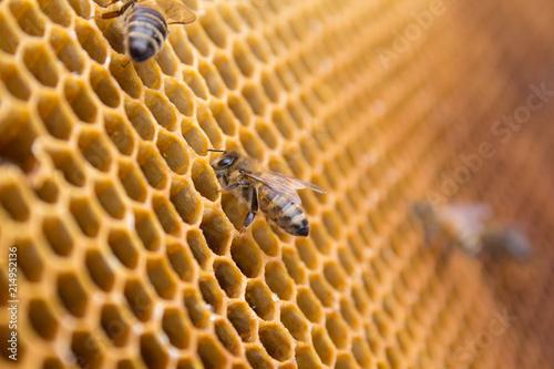 In de dag Bee Honeycombs - hexagonal structure full of honey inside beehive with working bees.
