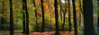 panoramic view of a forest in autumn colors