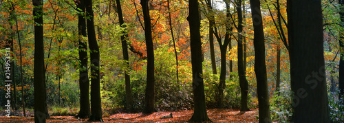 panoramic view of a forest in autumn colors - 214953313