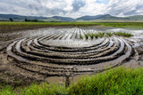 Flooded Potato Field. Agriculture ground after rain under water. Flooded agriculture fields. - 214960779