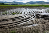Flooded Potato Field. Agriculture ground after rain under water. Flooded agriculture fields. - 214960975