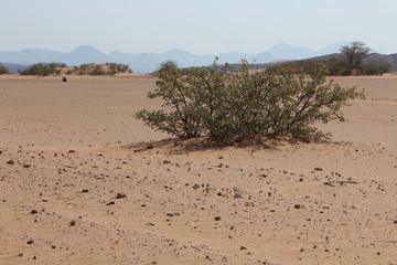 Busch in der Wüste