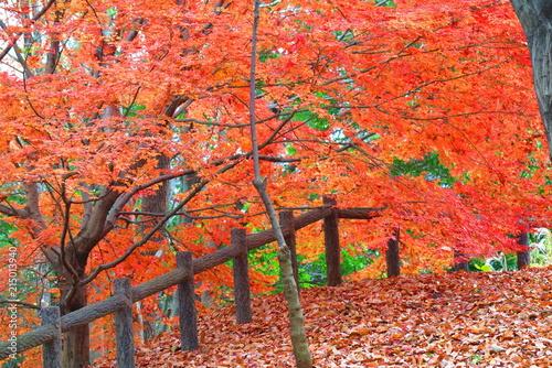 Canvas Rood 公園のもみじの風景14