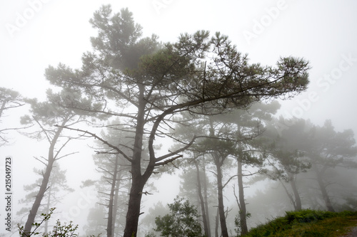 Forest with fog - 215049723