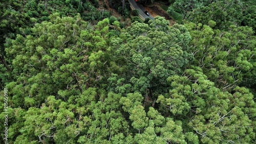 Green tree in forest, areal view
