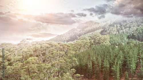 Aerial view of a forest in the mountains with clouds - 215051770