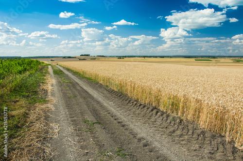 Foto Spatwand Zomer Sandy road through fields