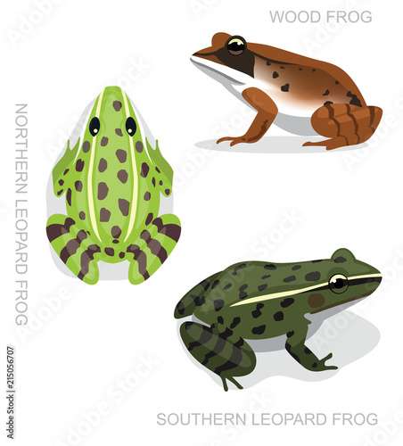 Frog Leopard Frog Set Cartoon Vector Illustration