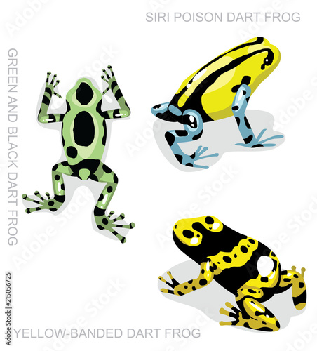 Frog Poison Dart Frog Frog Set Cartoon Vector Illustration 2