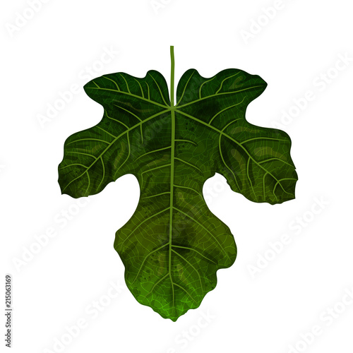 Hand drawn watercolor leaf isolated on white background, digital painting - 215063169