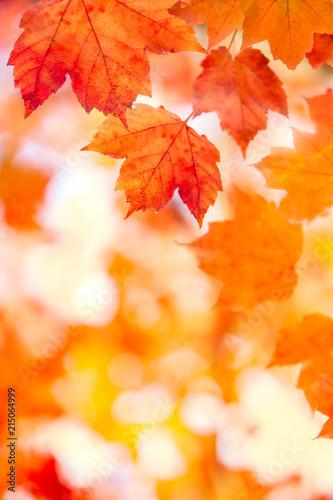 Canvas Oranje eclat Beautiful Fall Foliage Background