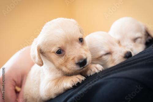 Cute Little Puppies Buy Photos Ap Images Detailview