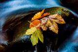 autumn leafage on wet stone - 215076147