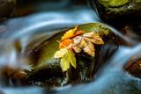 Autumn leafs on wet stone - 215076149