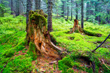 green moss on woods in forest - 215076166