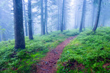 patway in mysterious green forest - 215084903