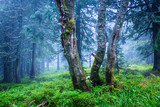 mist in forest - 215084912