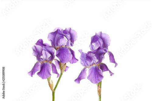 Aluminium Iris Purple Iris flowers decorative wallpaper, floral design