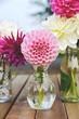 Leinwandbild Motiv Blumenstrauß - Dahlien