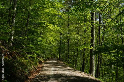 Leinwanddruck Bild Fruehlingswald; Waldweg im Fruehling;