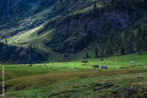 Foto Spatwand Zwart Berg und Pferde