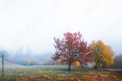 Canvas Wit Amazing scene on autumn mountains. Yellow and orange trees in fantastic morning sunlight. Carpathians, Europe. Landscape photography