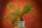 beautiful green tropical palm tree in  pot - 215148724