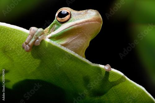 Foto Spatwand Kikker Tree frog shadow