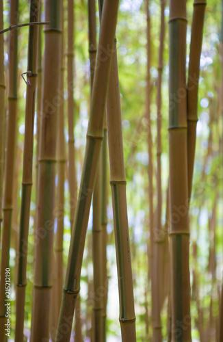 Canvas Bamboe Forêt de bambous