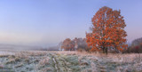 Fototapety Autumn nature landscape with clear sky and colored tree. Cold meadow with hoarfrost on grass in november morning. Amazing fall. Vibrant panoramic view on natural wild autumnal meadow before forest.