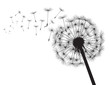 Black silhouette Dandelions. Vector Illustration. - 215232556