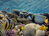 Tropical fishes and corals reef in ocean - 215258554