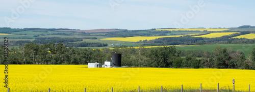Plexiglas Oranje Canola Fields Alberta