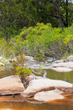 Forest plants near the idyllic Walsh River in Queensland, Australia - 215312137