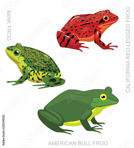 Frog American Frog Set Cartoon Vector Illustration