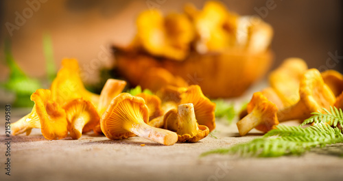 Raw wild chanterelle mushrooms on old rustic table background. Organic fresh chanterelles background. Soft focus - 215349583