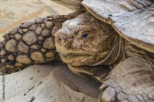 Foto Spatwand Schildpad Turtle tortoise reptile animal shell