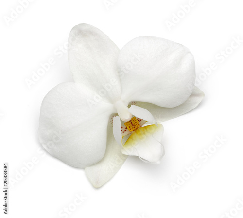 Orchid - 215383584