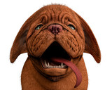 dogue de bordeaux, bordeaux mastiff, french mastiff or bordeauxdog in a white background