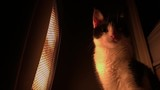 Cat Standing in Front of a Warmer Low Shot. - 215426581