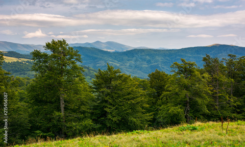 primeval beech forest of Carpathian mountains. Svydovets ridge in the distance. beautiful nature scenery.