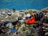 Coral reef with giant clam - 215464166