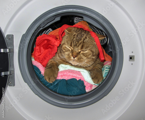 The cat is sleeping amongst dirty laundry inside the washing machine.