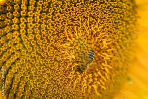 Canvas Oranje Sunflower