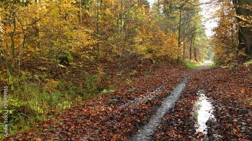 Fotobehang Weg in bos Jesień w parku