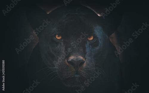 Foto Spatwand Panter black jaguar